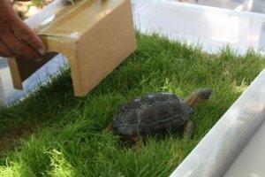 Российский студент попытался вывезти из Мексики 320 черепах