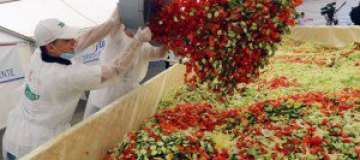 В Ростовской области приготовят гигантскую селедку под шубой