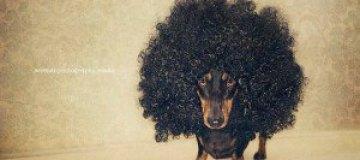 Забавные фотографии домашних животных