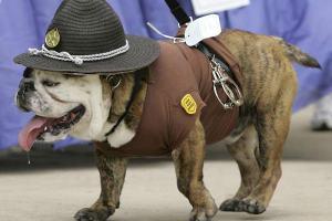 Житель Израиля укусил полицейского пса