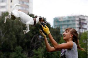 В Москве собаки ловили летающие тарелки