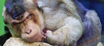Обезьяны из удмуртского зоопарка научились мыть пол