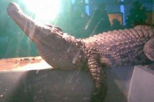 В Казахстане на детской площадке нашли крокодила и питона